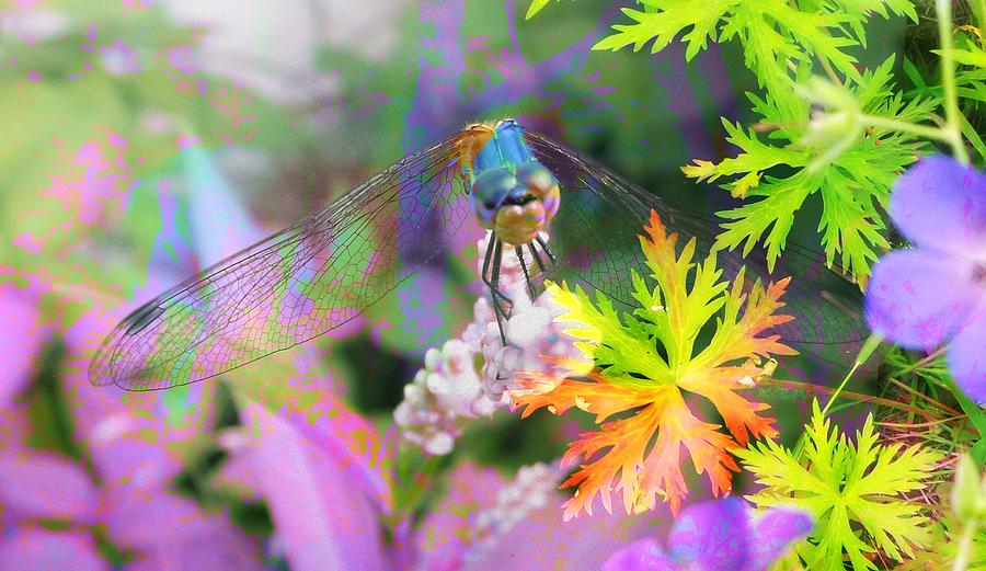 Dragonfly On Spinners Geranium Photograph