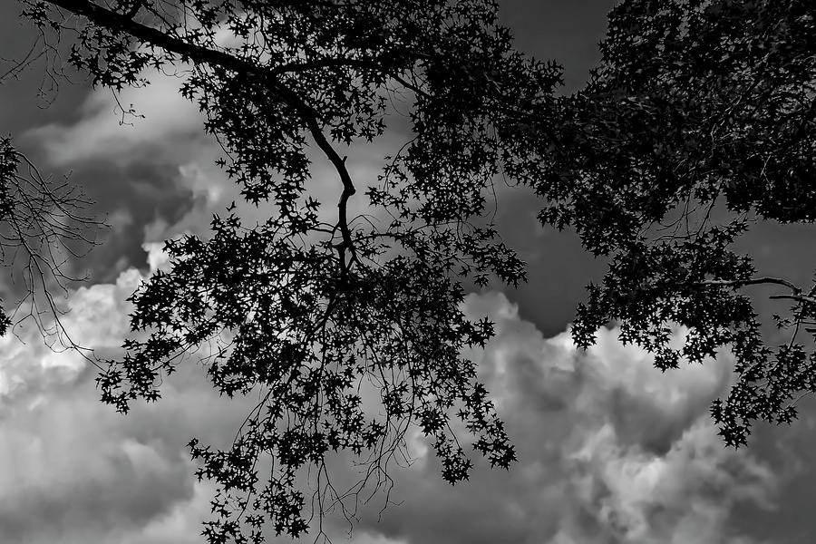 Dramatic Clouds And Leaves Photograph