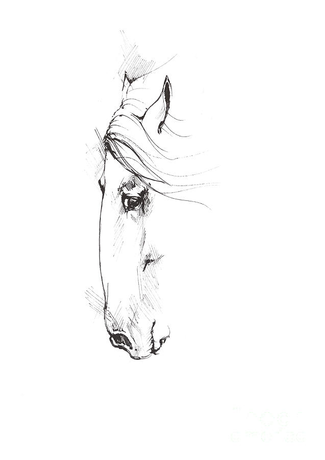 Drawing Of A Horse 2017 02 07 Drawing