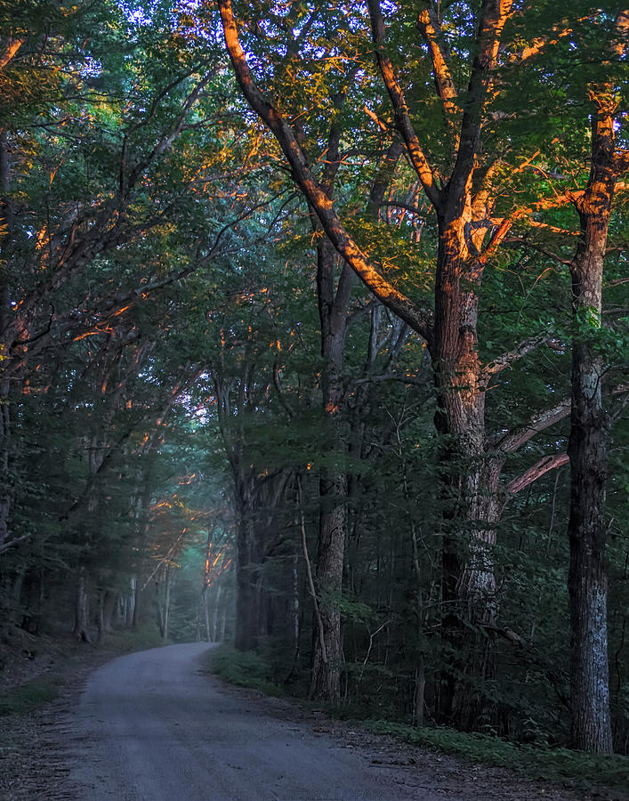Trees Photograph - Dream On by Jerry LoFaro