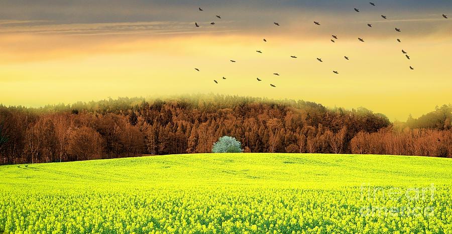 Dreaming Landscape Photograph