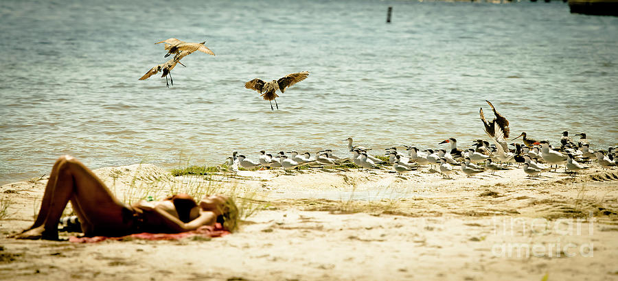 Sunbather Photograph - Dreaming Of Birds by Felix Lai