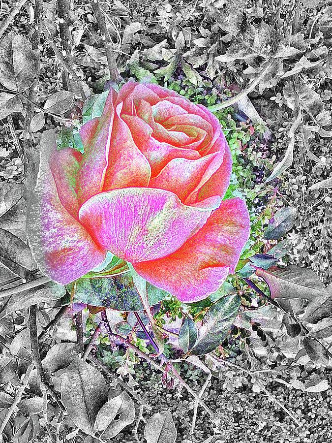 Dreamy Rose #06 Mixed Media
