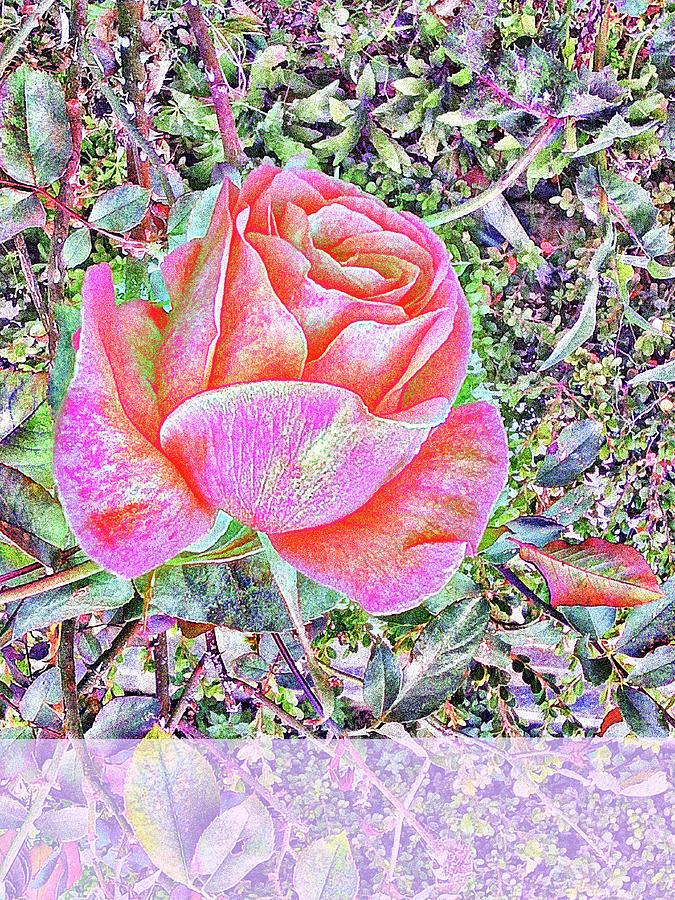 Dreamy Rose #11 Mixed Media