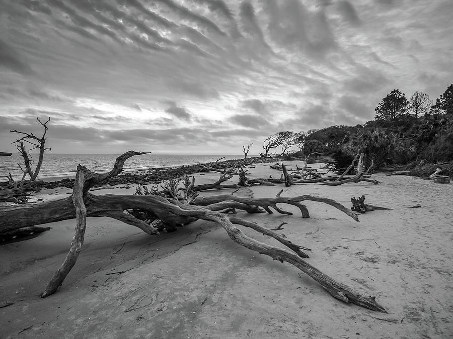 Drift wood beach photograph by Louis Dallara