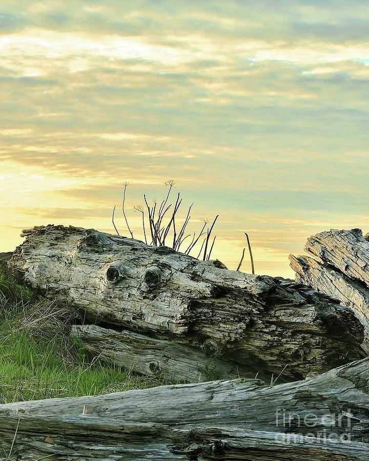 Landscape Photograph - Driftwood 2 - Cape Meares - Oregon by Artistic Oregon Photo