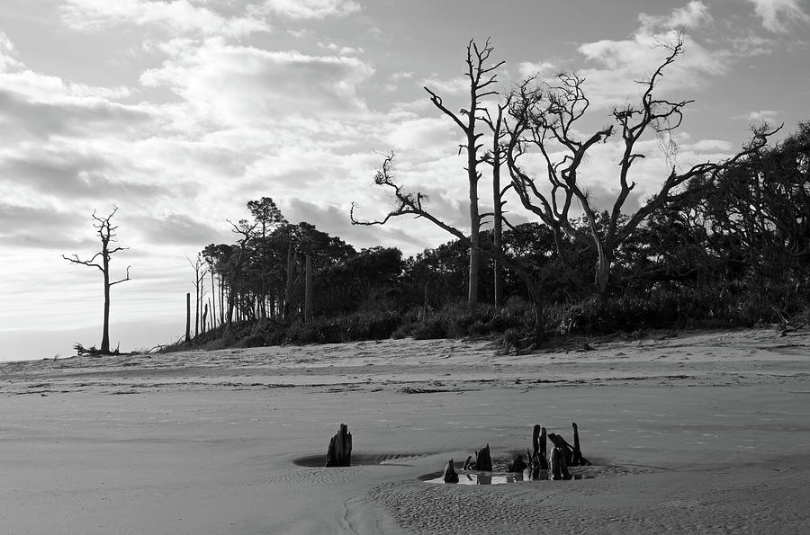 Driftwood Beach Jekyll Island Black White and Pine by Bruce Gourley