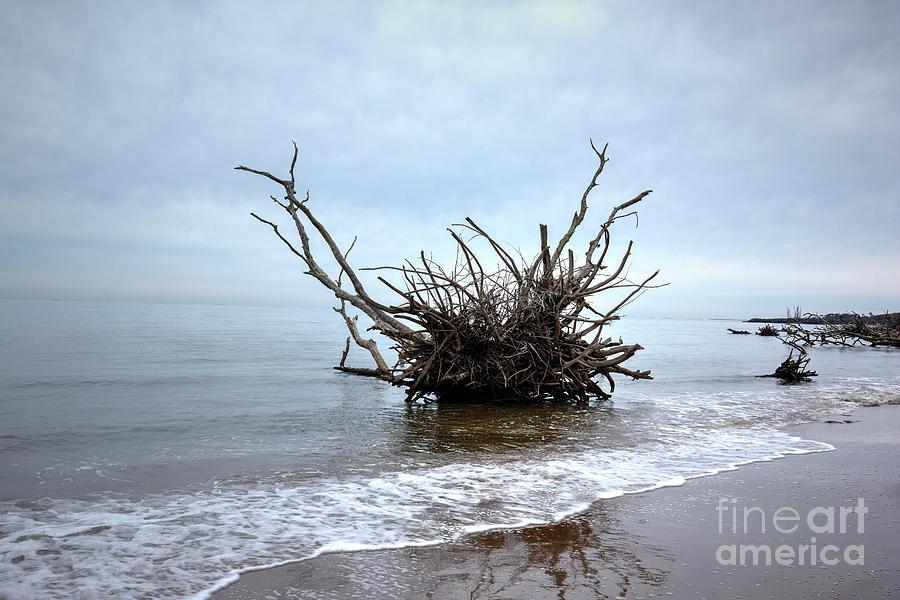 Driftwood Photograph - Driftwood by Felix Lai