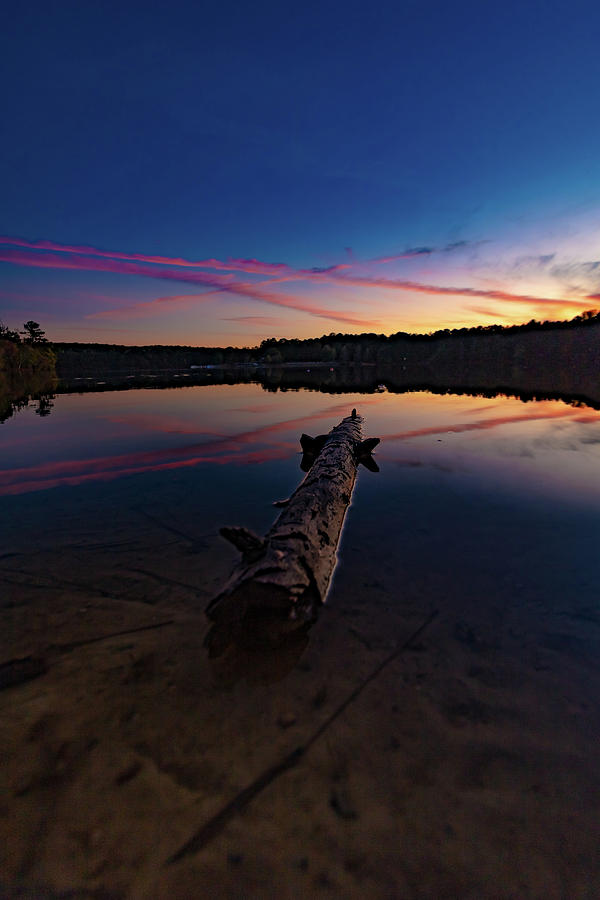 Driftwood by Mike Dunn