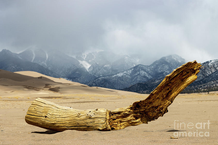 Driftwood On The Dunes Photograph
