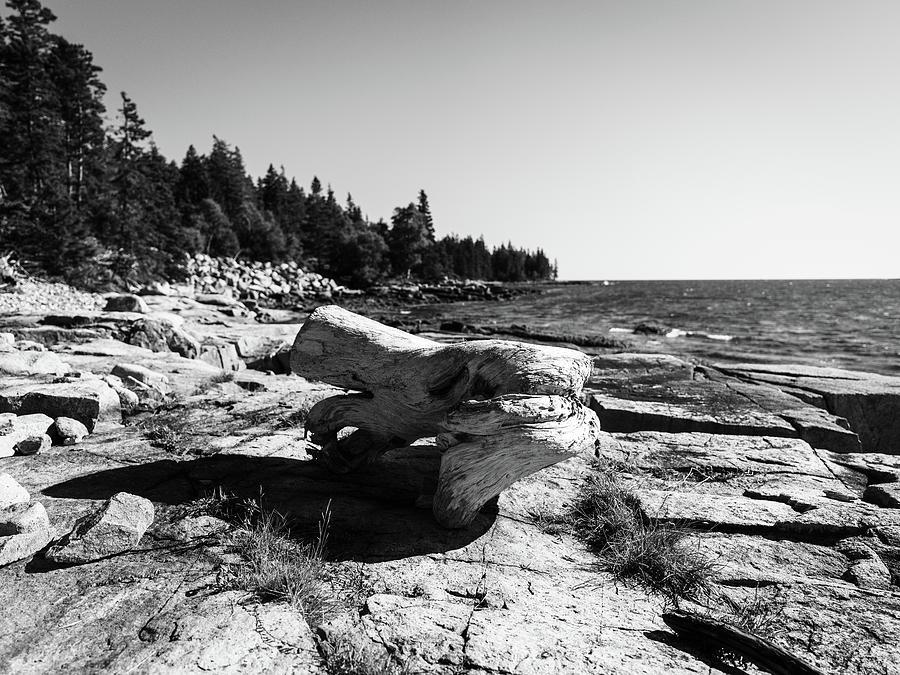 Driftwood On The Rocks Photograph