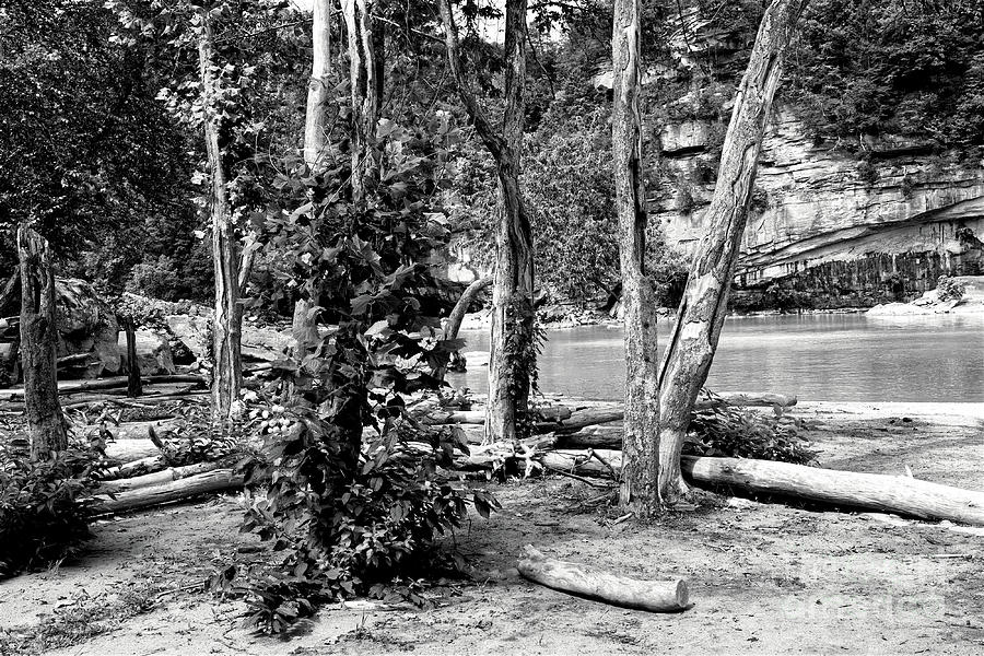 Driftwood Photograph - Driftwood by Phil Perkins