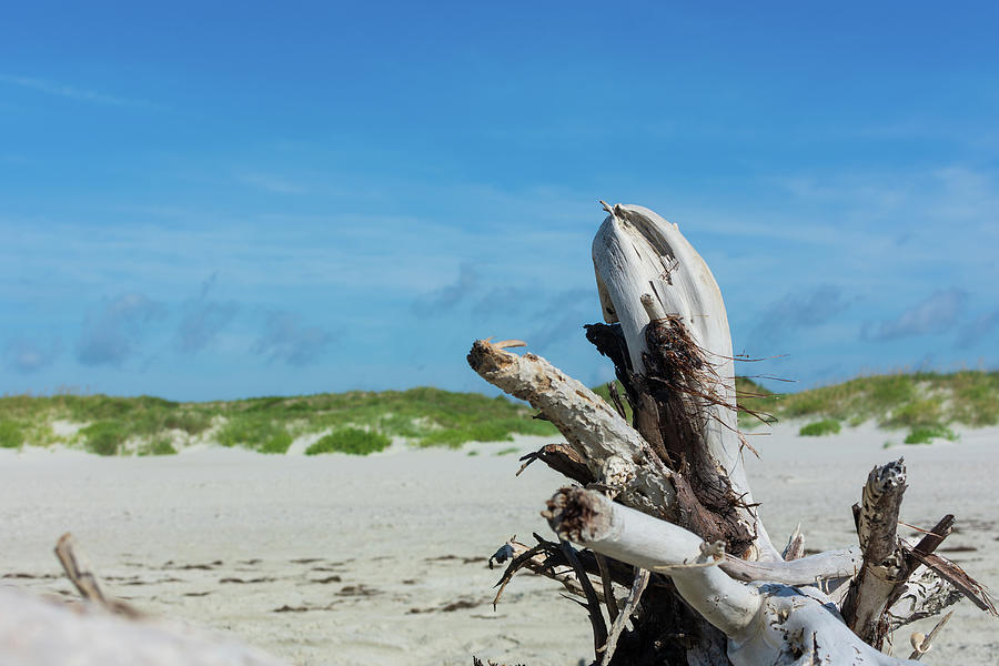 Driftwood Sculpture On North Point Photograph
