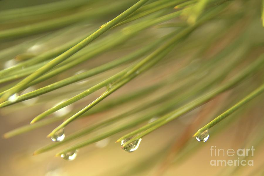 Rain Photograph - Droplets by Roland Stanke