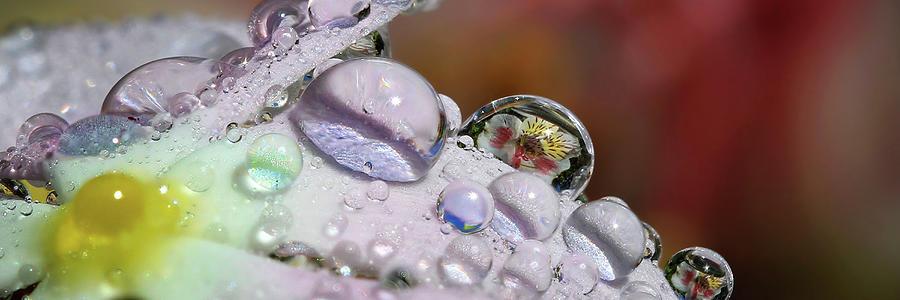 Drops Of Light Panorama Photograph
