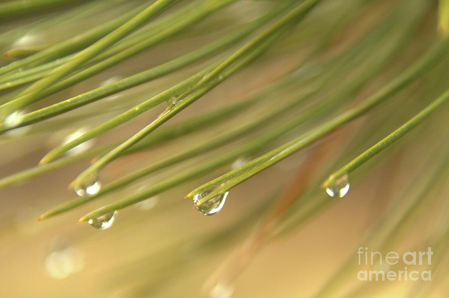 Drops Photograph - Drops by Roland Stanke