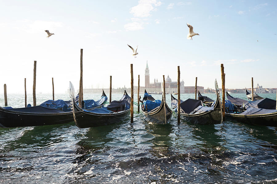 Dsc6469 - Seagulls on blu gondola, Venice by Marco Missiaja