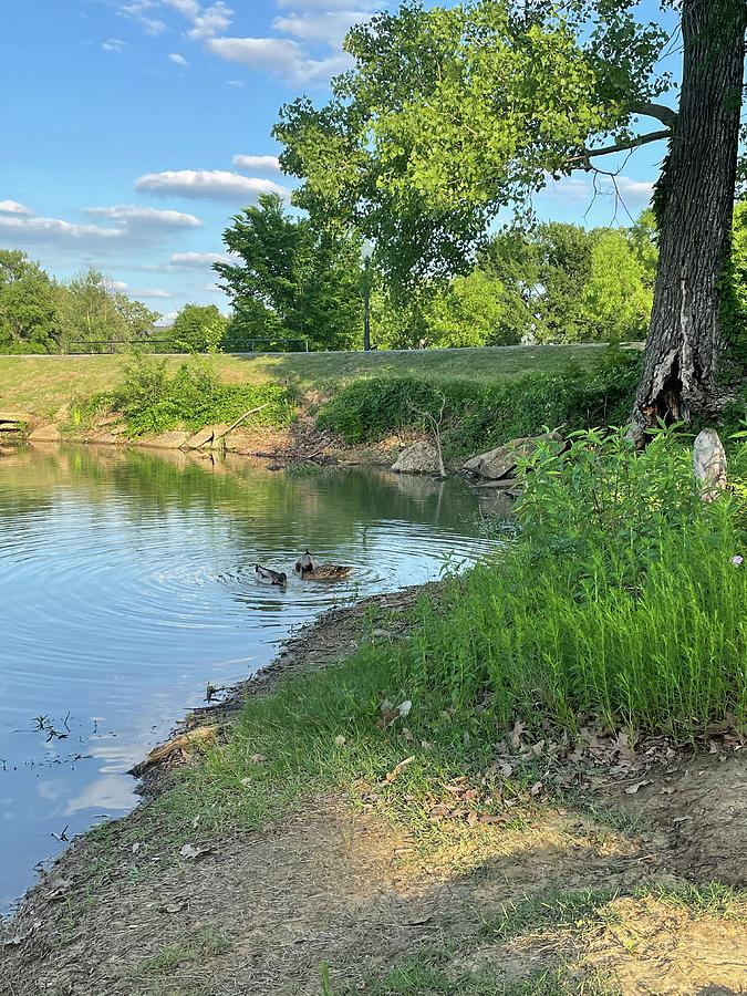 Duck Pond Photograph