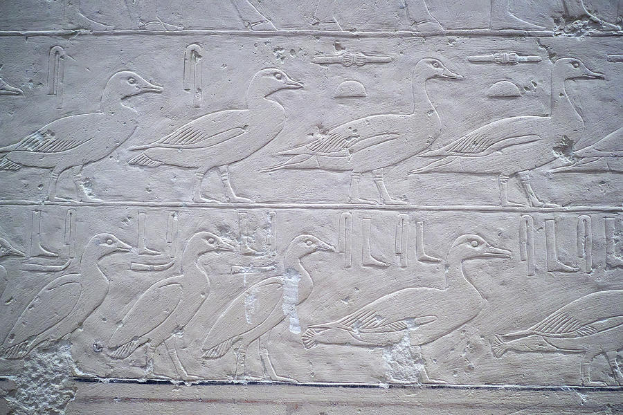 Ducks and Geese. Hieroglyphs. Berlin by Jouko Lehto