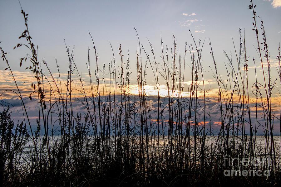 Dune Grass Sunrise Photograph