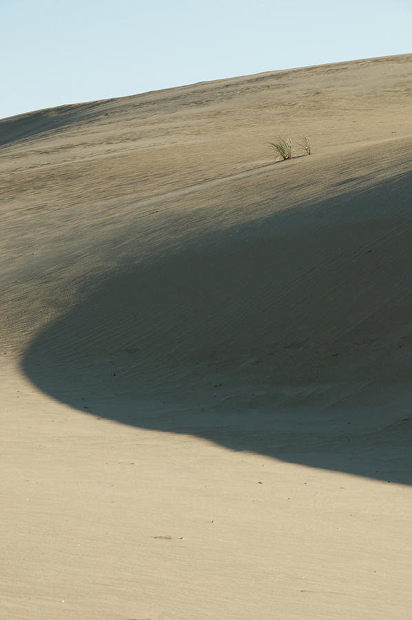 Shadow Photograph - Dune by Melissa Southern