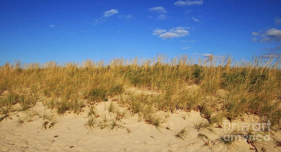 Dunes At Sunken Meadow by Karen Silvestri