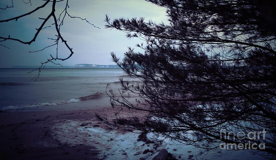 dunes thru trees by AnnMarie Parson-McNamara