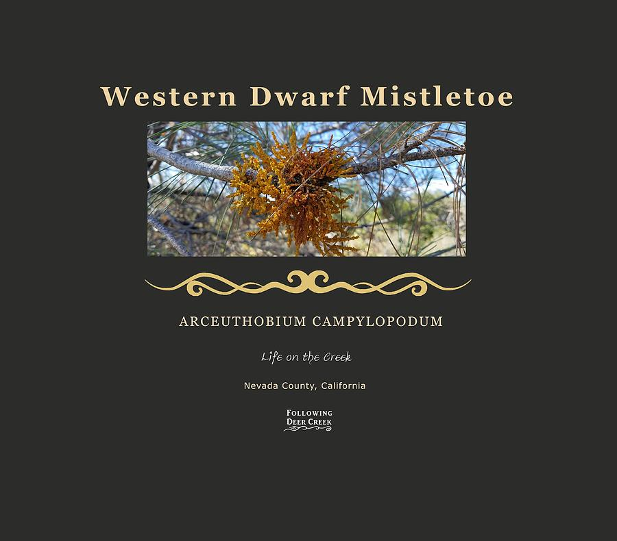 Dwarf Mistletoe by Lisa Redfern