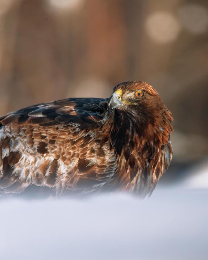 Eagle Eye - Portrait Orientation Photograph