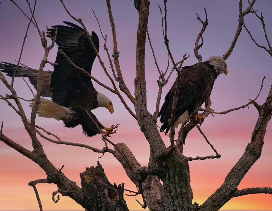 Eagle Has Landed Photograph