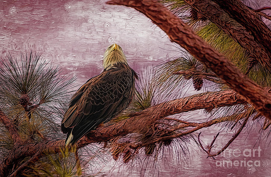 Eagle in the Pine by Deborah Benoit
