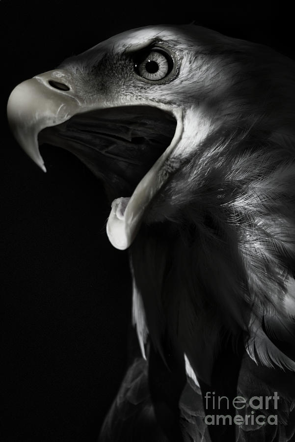 Eagle Out Of Darkness - Black And White Photograph