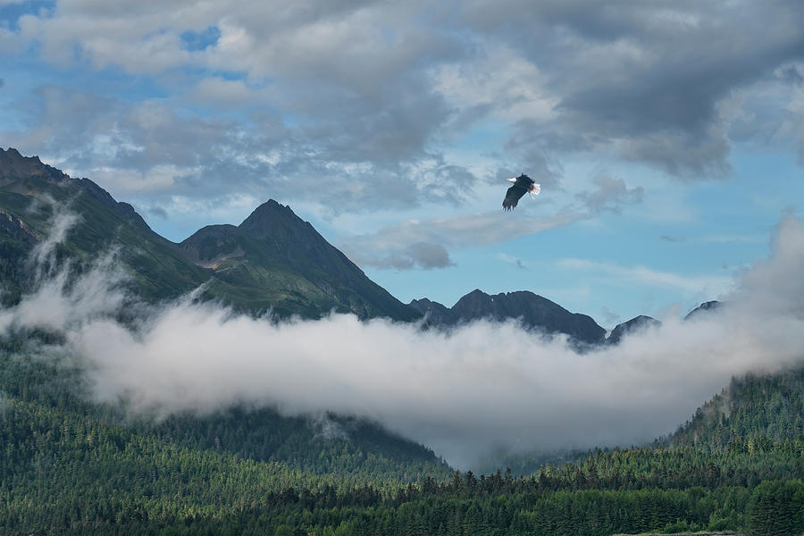 Eagle over Southeast Alaska by Michele Cornelius