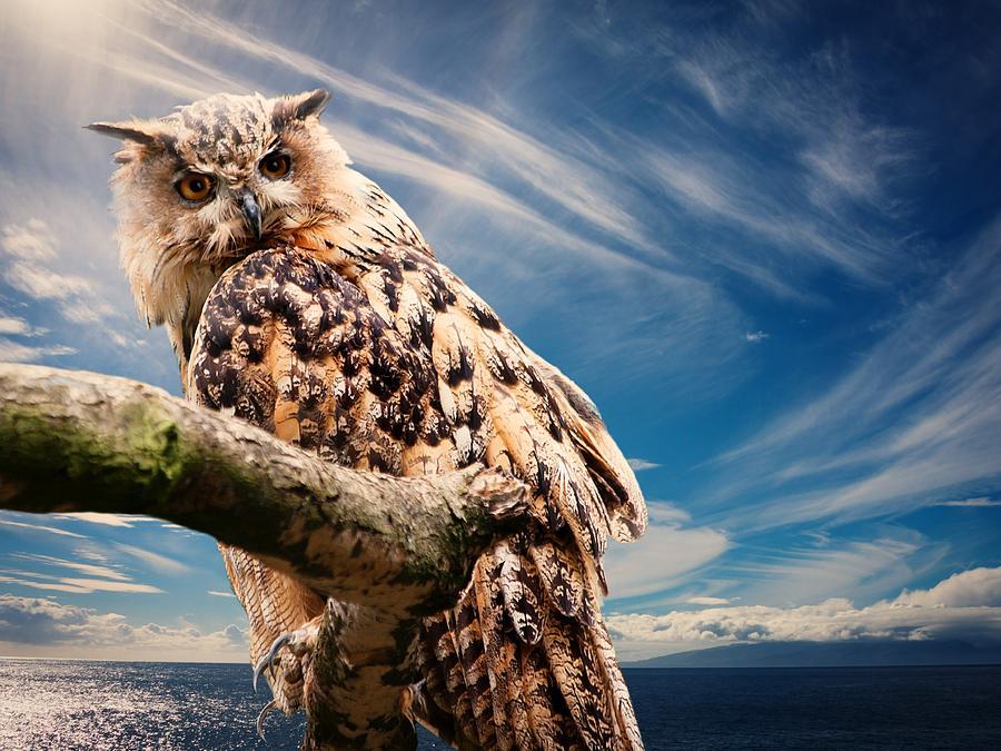 Eagle Owl by Joy of Life Arts
