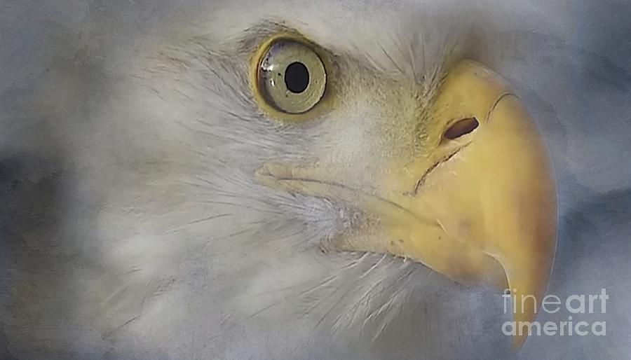 Eagles Face Digital Art