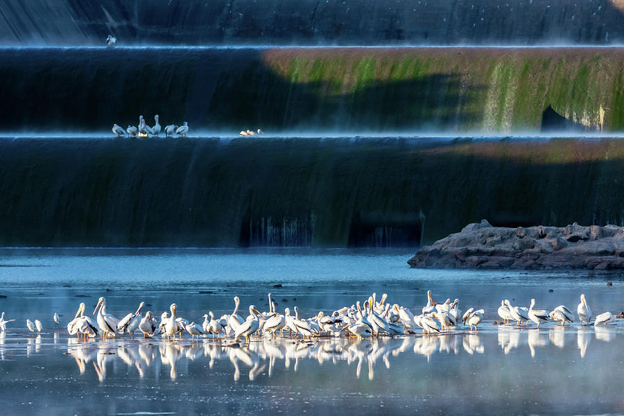 Early Morning Gathering At The Spillway Photograph
