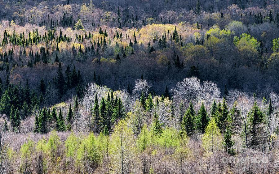 Early Spring Mountain Light Photograph