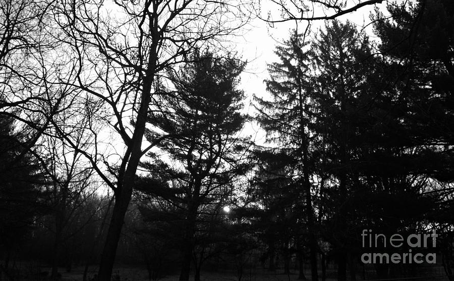 Landscape Photograph - Early Spring Sunrise Fog - Black and White by Frank J Casella