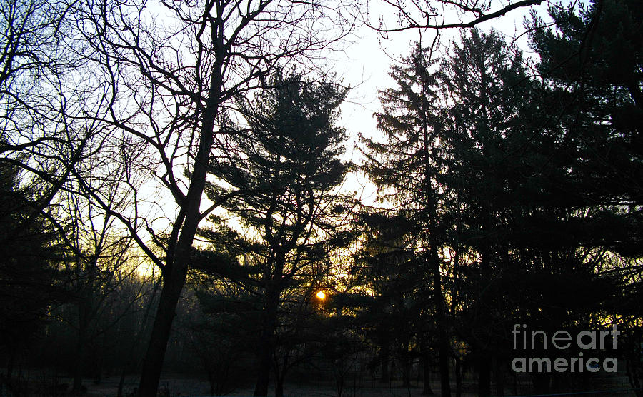 Trees Photograph - Early Spring Sunrise Fog by Frank J Casella