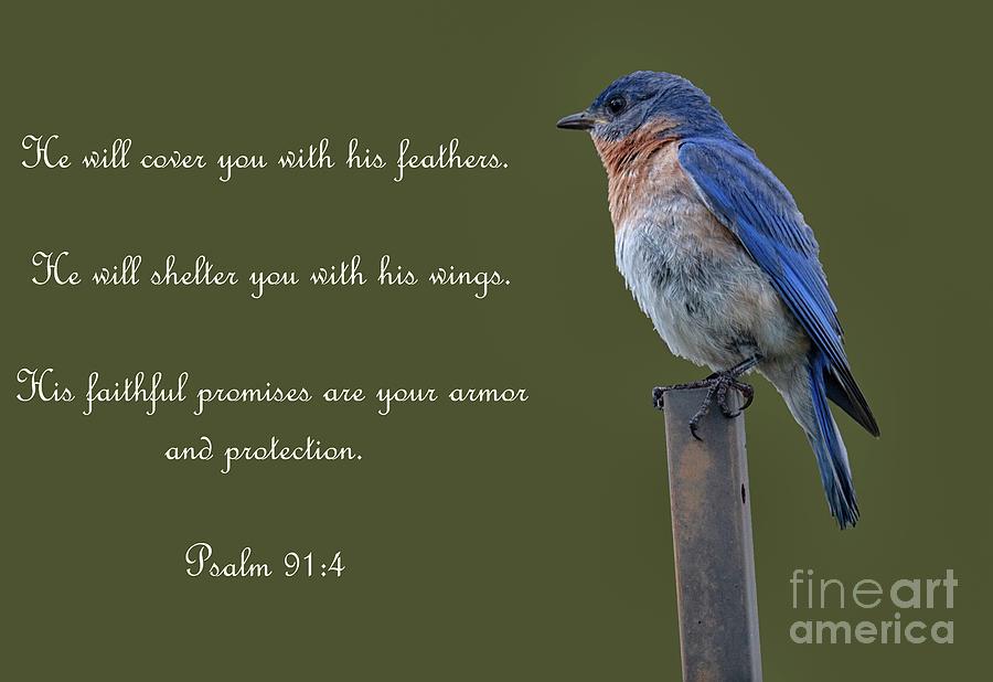 Eastern Blue Bird - Psalm 91 Photograph