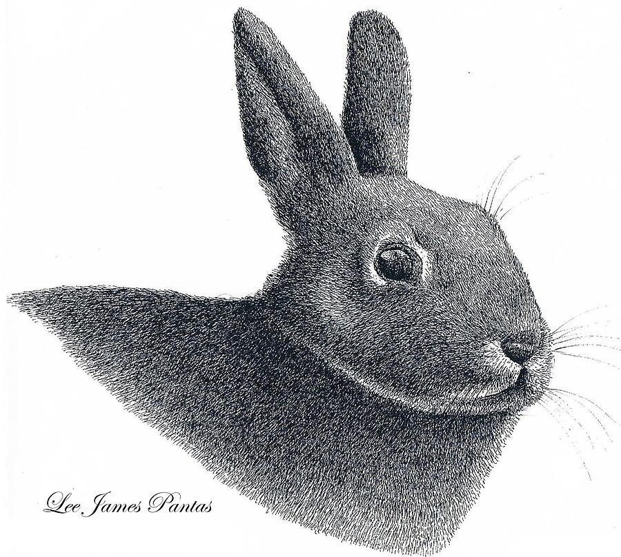 Rabbit Drawing - Eastern Cottontail Rabbit by Lee Pantas