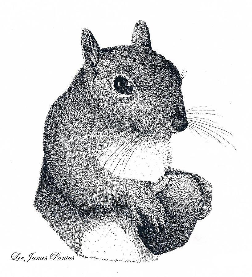 Squirrel Drawing - Eastern Gray Squirrel by Lee Pantas