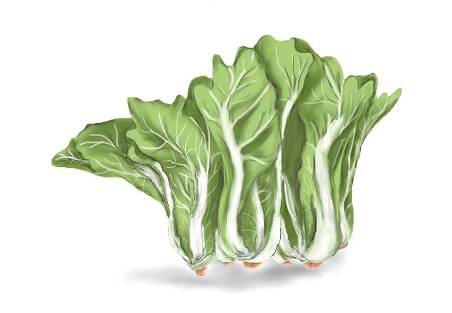Eat Veggie a Day by Sandy Gabriel