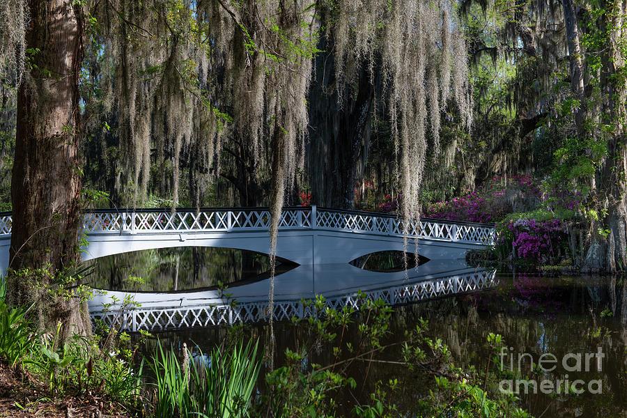 Echoes Of The Past - Magnolia Plantation Long White Bridge Photograph