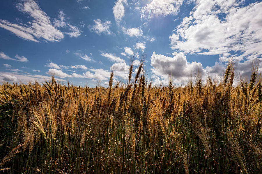 Edge of the Field by Scott Bean