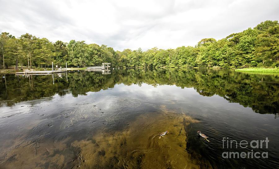 Crawfordville Photograph - Edward Ball Wakulla Springs State Park, Crawfordville, Florida by Felix Lai