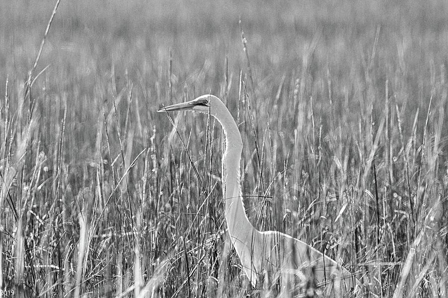 Egret Among The Reeds Black And White by Lisa Wooten