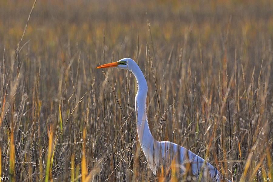 Egret Among The Reeds  by Lisa Wooten