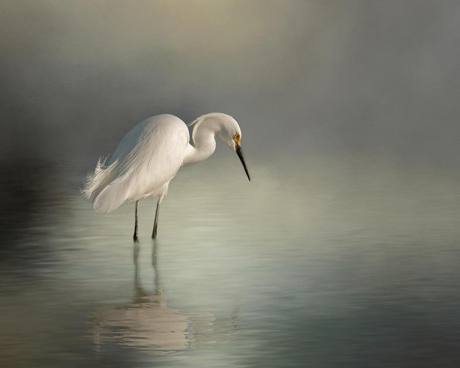 Egret Photograph - Egret Fantasy by Jerry Deutsch