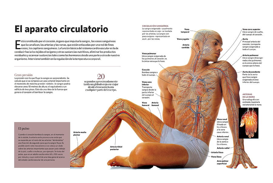 El aparato circulatorio by Album